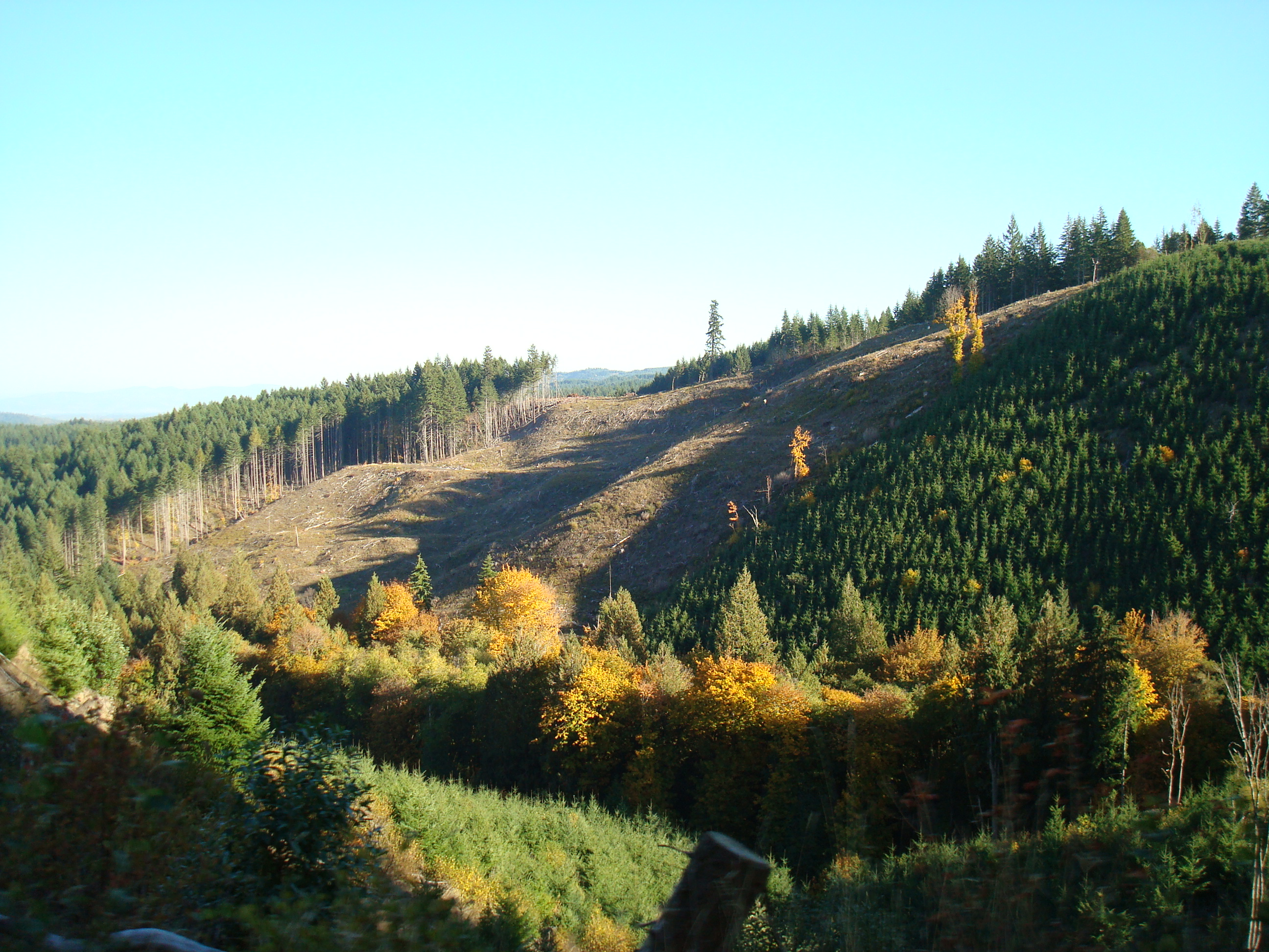 Deforestation Of The Pacific Northwest Essay Research