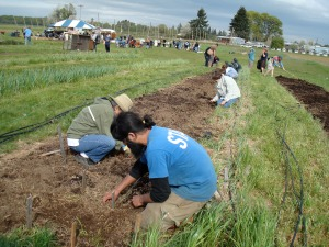 The Oregon State organic growers club farm