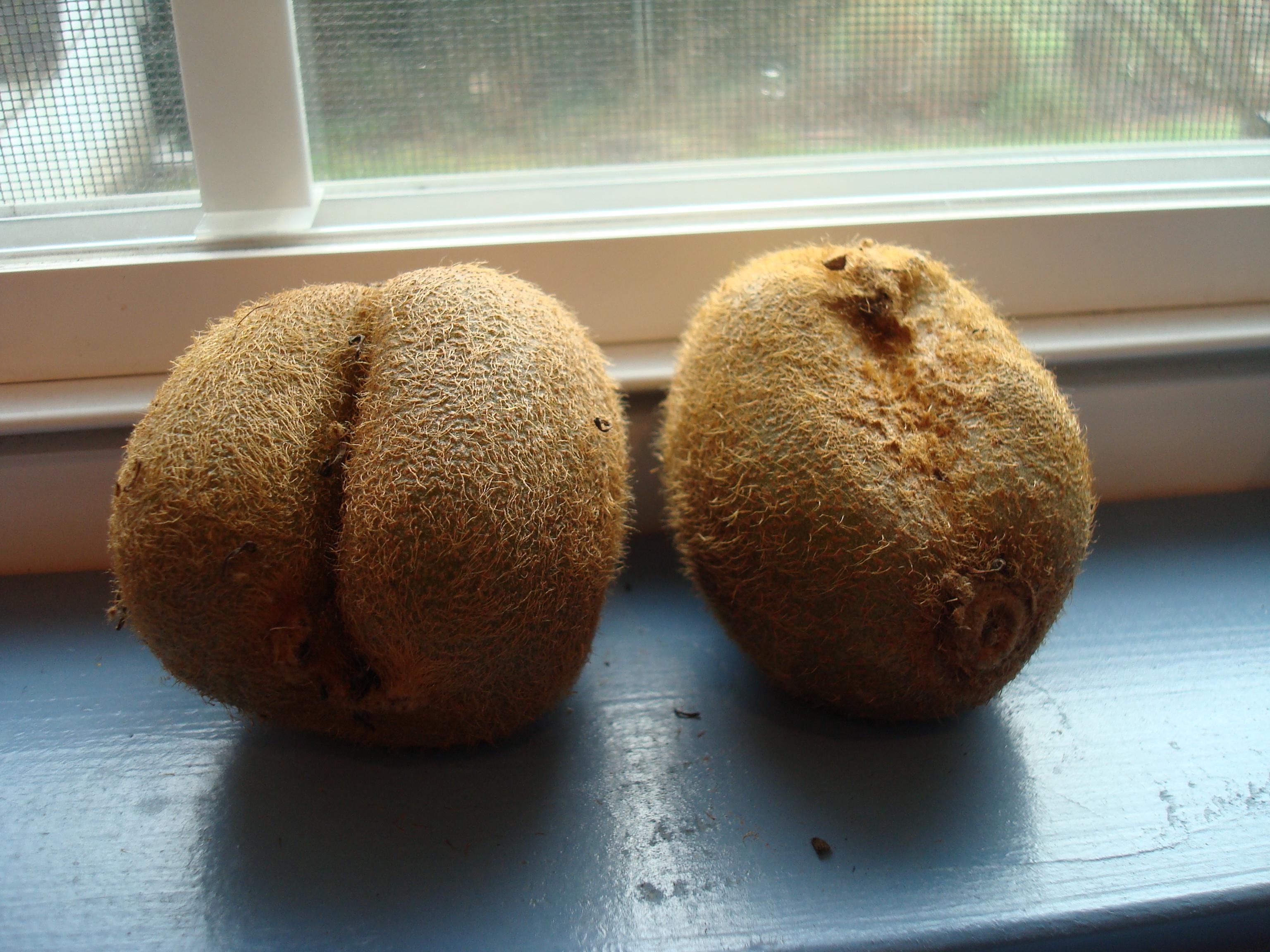 Hairy kiwi butt: ...