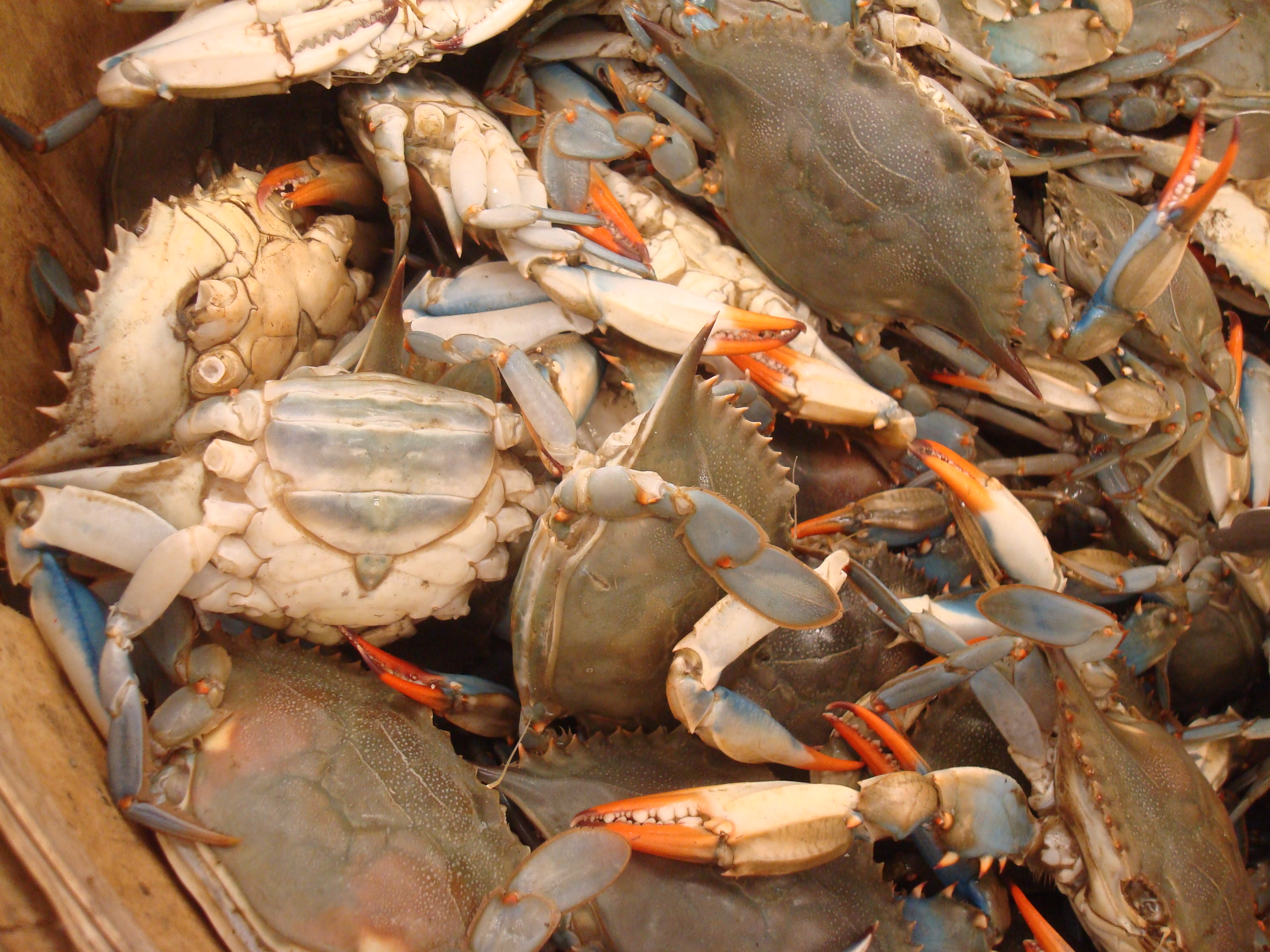 how to cook live blue crab